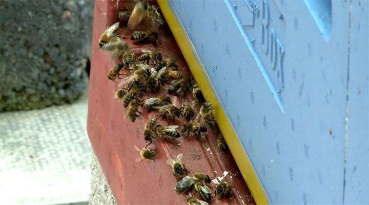 Keep The Hive Alive